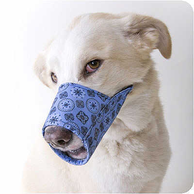 Dog Muzzles and Harnesses