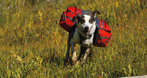 DOG & PUPPY BACKPACK SIZE, HOW TO CHOOSE CHOOSE BEST DOG BACKPACK, BAG