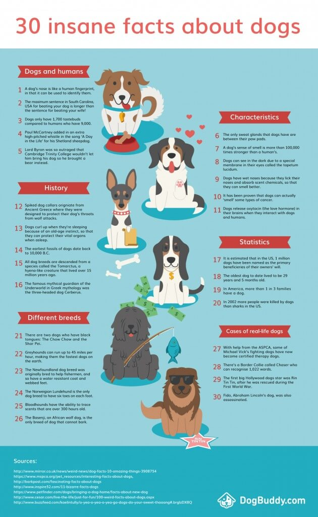 Dog Facts, Stories, Stereotypes and Myths