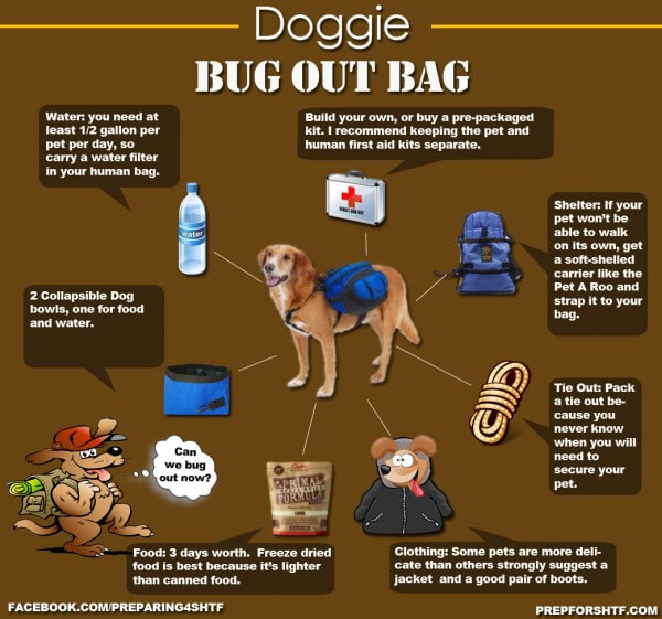 DOG HIKING, HIKING WITH YOUR DOG - GUIDE, MANUAL, INSTRUCTIONS