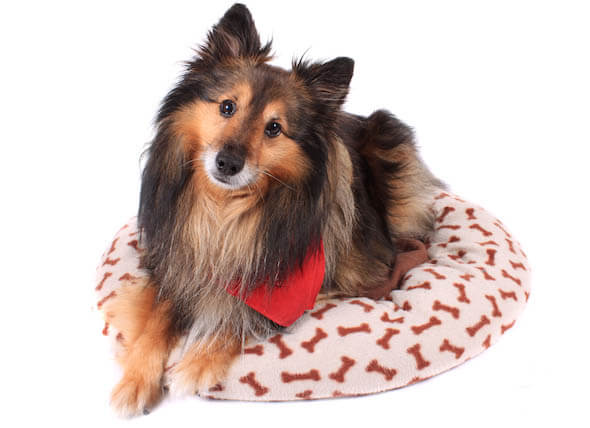 DIY HOMEMADE DOG & PUPPY BED COVER LUXURY, COMFORTABLE, CLEARANCE