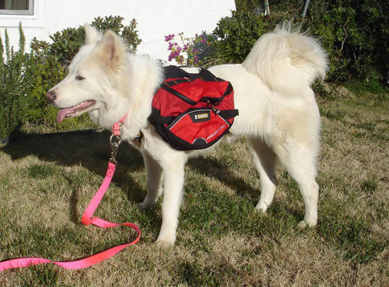 HOW TO MAINTAIN DOG BACKPACK