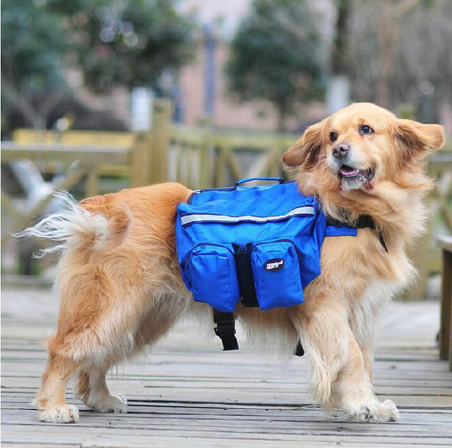 DOG & PUPPY BACKPACK SIZE, FIT and MEASURE GUIDE