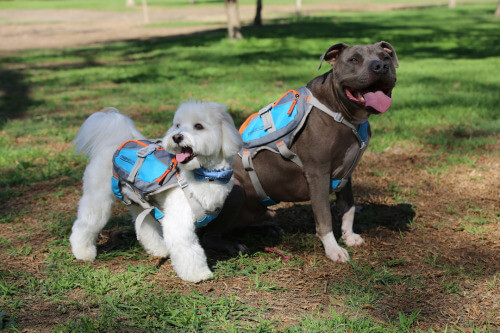 CESAR MILLAN's DOG & PUPPY BACKPACKS