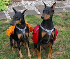 DOG & PUPPY BACKPACK HOMEMADE DIY GUIDE - PHOTOS, VIDEOS, INFOGRAPHICS - Instructions