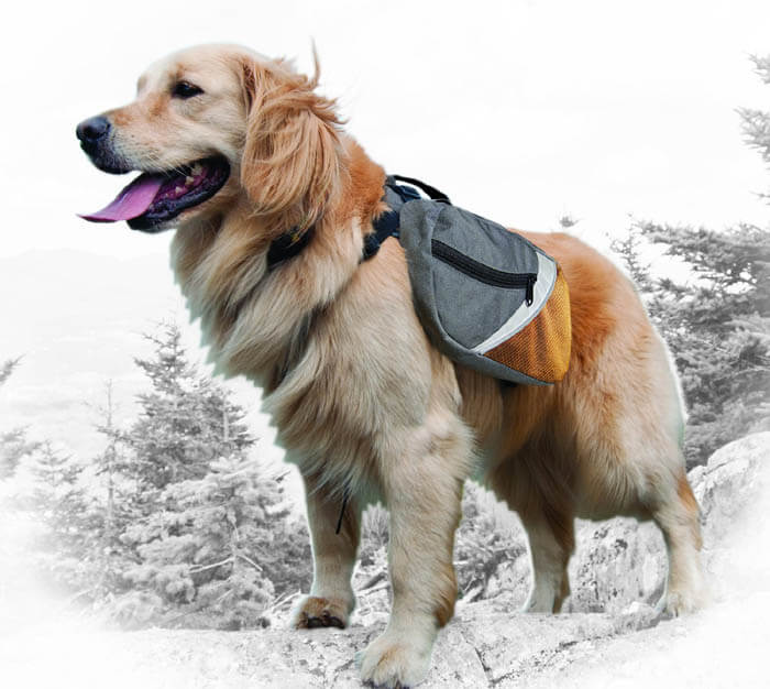 DOG & PUPPY BACKPACK CATEGORIES, REVIEWS & COMPARISON