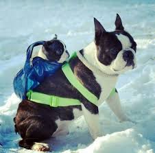 DOG & PUPPY CARRIERS SPECIFICATIONS, FEATURES, COMPARISON