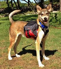DOG & PUPPY BACKPACK WEAR GUIDE - TEACHING GUIDE & INSTRUCTIONS