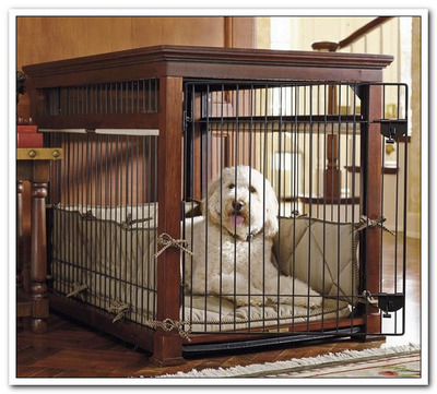 WHAT TO PUT IN DOG & PUPPY CRATE
