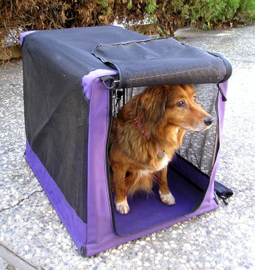 BEST DOG & PUPPY CRATE BUYING GUIDE & INSTRUCTIONS