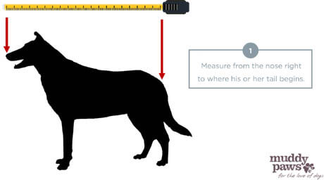 HOW TO FIT DOG AND PUPPY BED - DOG BED MEASURE & SIZE GUIDE
