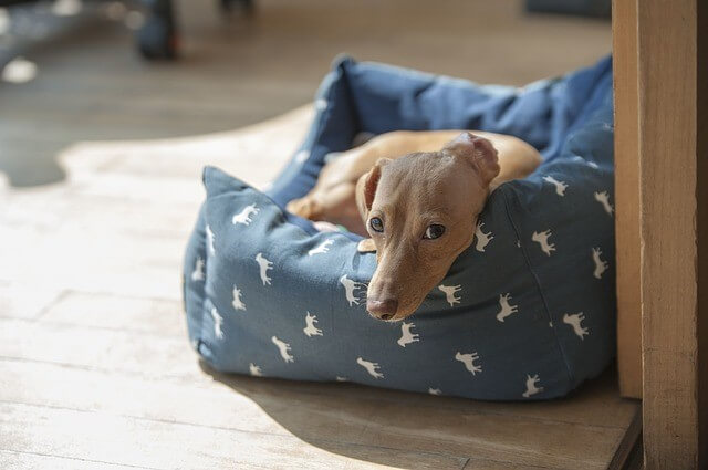 TRAVEL & OUTDOOR DOG BEDS