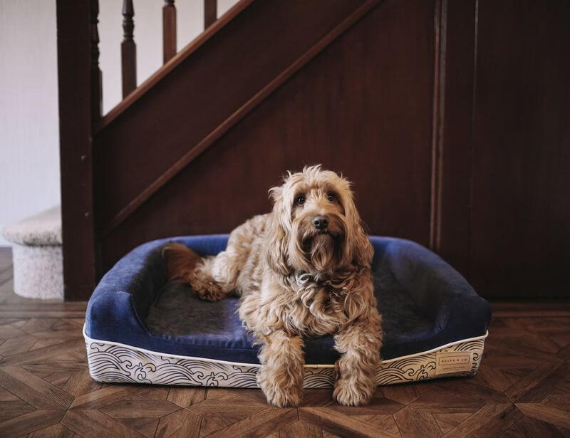 INDESTRUCTABLE DOG & PUPPY BEDS COUCHES AND SOFAS