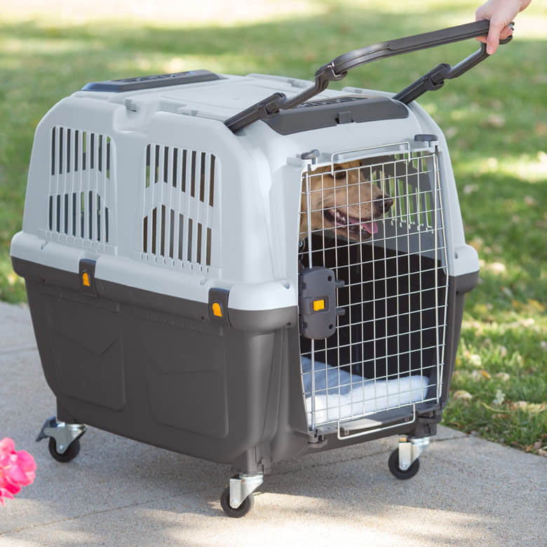WHERE TO PUT DOG & PUPPY CRATE IN HOME