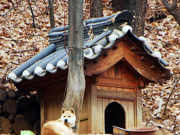 Classical Korean Architecture - CREATIVE DESIGNER DOG & PUPPY HOUSES, KENNELS