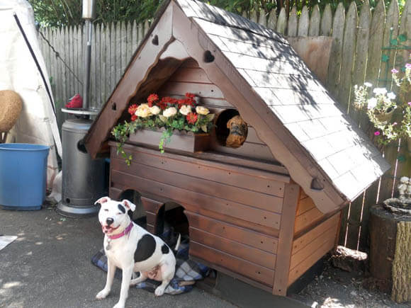 Hot Tub House - CREATIVE DESIGNER DOG & PUPPY HOUSES, KENNELS