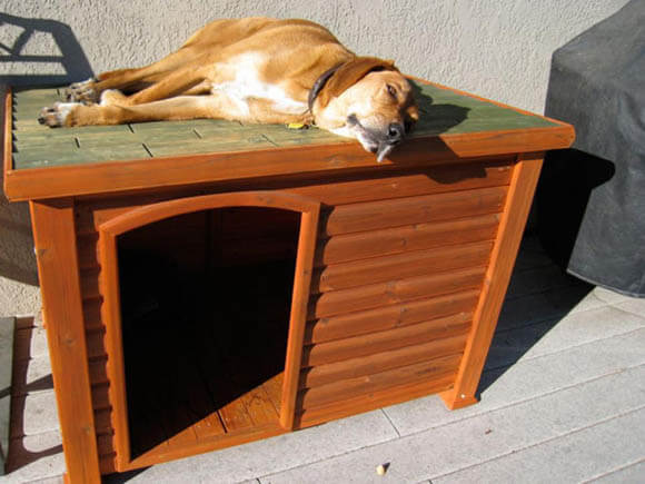 Harlesson Flat Top - CREATIVE DESIGNER DOG & PUPPY HOUSES, KENNELS