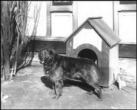 HISTORY OF DOGHOUSE, KENNEL, IGLOO