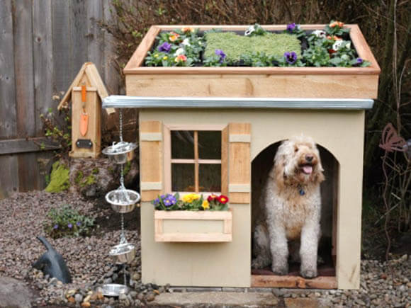 Rooftop Garden - CREATIVE DESIGNER DOG & PUPPY HOUSES, KENNELS