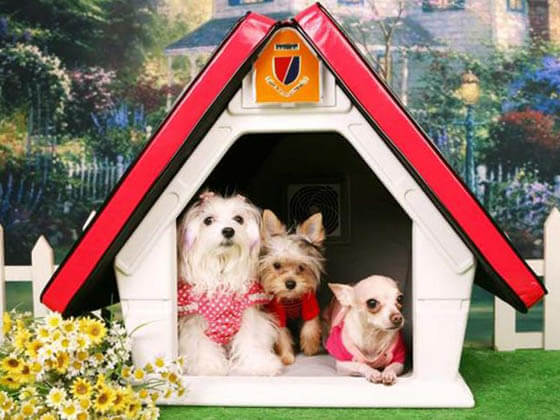 Product and Photo by Funky Pets - CREATIVE DESIGNER DOG & PUPPY HOUSES, KENNELS