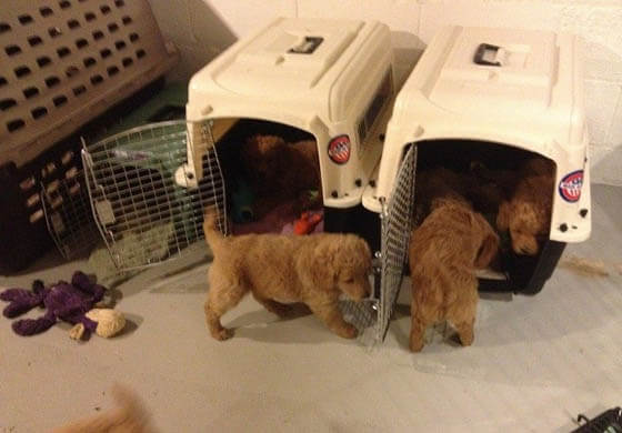 DOG CRATES: SIZE, DESIGN & MATERIAL - WOODEN, WIRED, FABRIC, PLASTIC