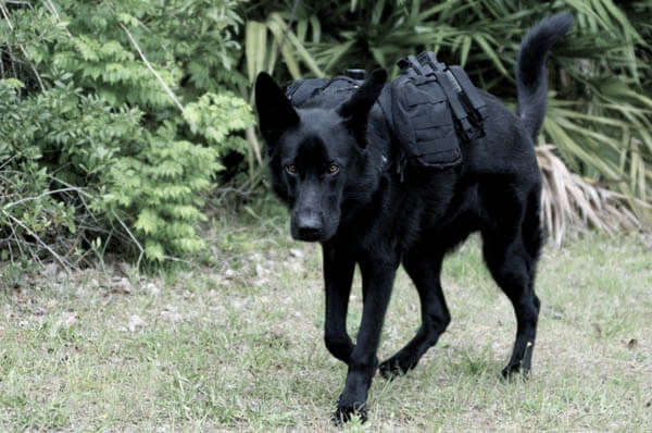 MILITARY K9 POLICE DOG BACKPACK, BAG