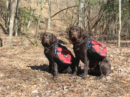 DOG & PUPPY BACKPACK WEAR TRAINING GUIDE - TEACHING GUIDE & INSTRUCTIONS