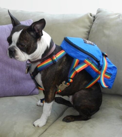 CUSTOM DOG & PUPPY CARRIERS, BAGS, BACKPACKS - BUY ONLINE, COMPARISON, REVIEWS