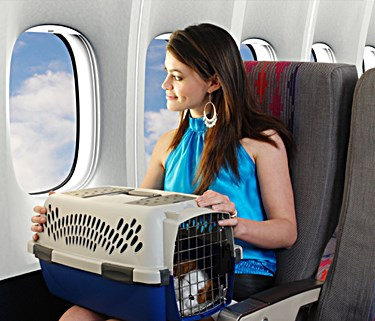 HOW TO CHOOSE THE BEST AIRLINE APPOVED DOG CARRIERS, BASKETS, AIRPLANE TRAVEL WITH DOG