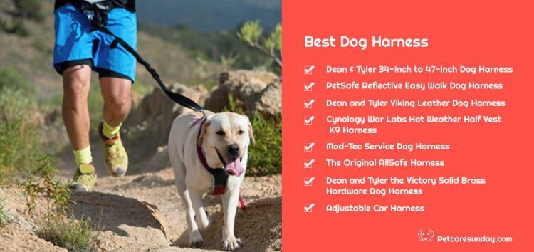 BEST DOG HARNESSES REVIEWS, DECISIONS, INFORMATION, TIPS, DOG MUZZLE, DOG CONTROL