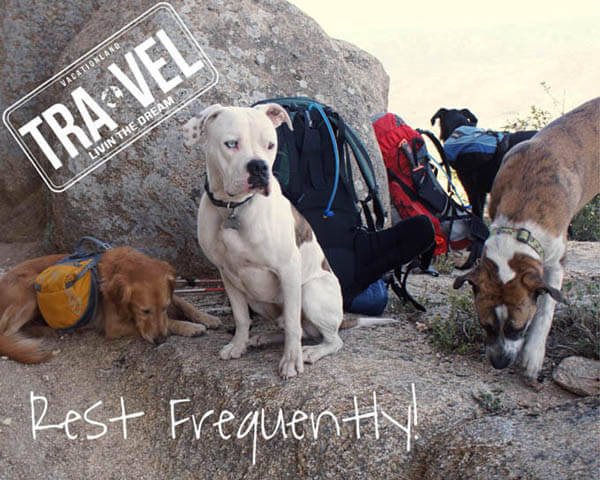 CAMPING WITH YOUR DOG, HIKING WITH YOUR DOG - TIPS, VIDEOS, PHOTOS,  GUIDE, MANUAL, INSTRUCTIONS