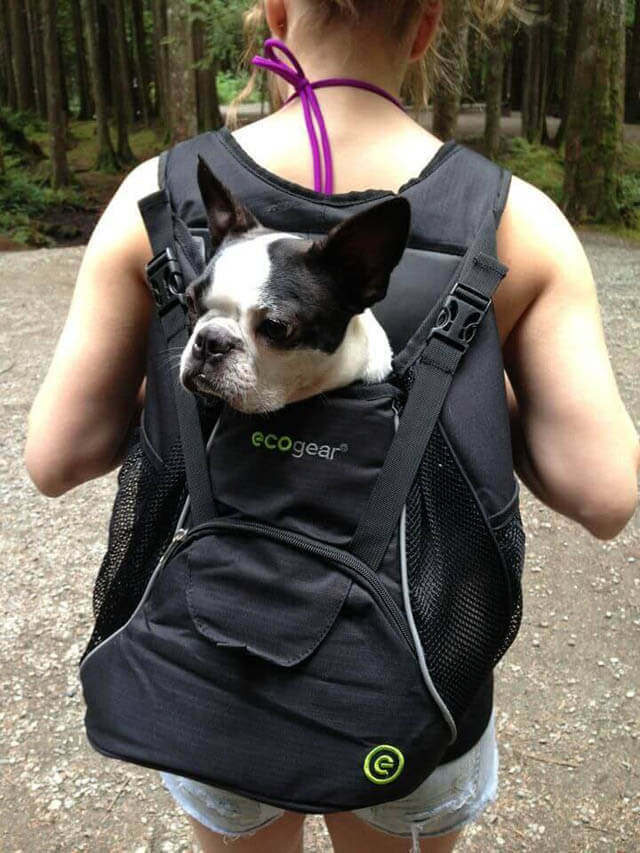 BEST DOG & PUPPY CARRIER BACKPACKS REVIEWS, BUY, COMPARISON, OUTDOOR SADDLE BAGS, DOG CARRYING HARNESS