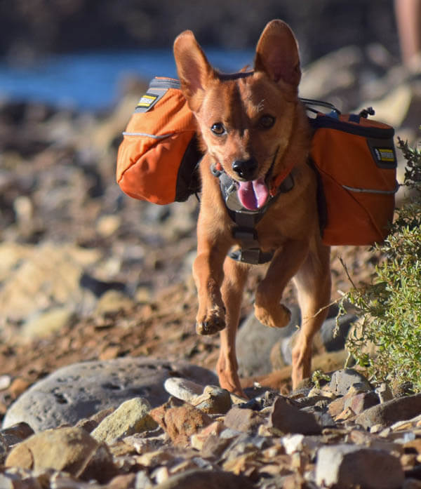 DIFFERENT BACKPACKS FOR DIFFERENT DOGS