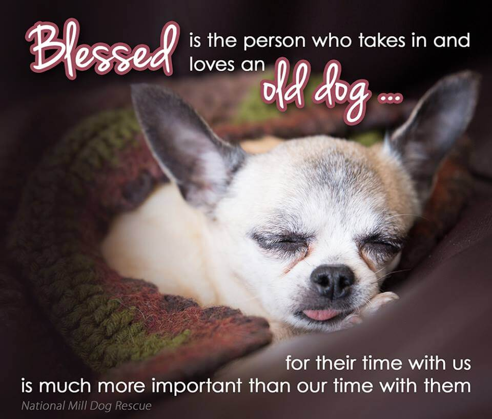 SHELTERS, RESCUED DOGS, ADOPT A DOG or A PUPPY!!!