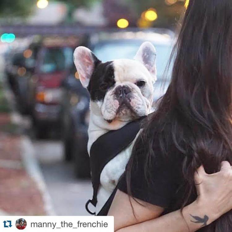DOG & PUPPY CARRIERS SPECIFICATIONS, FEATURES, COMPARISON, VIDEO, DOG CARRYING BAGS