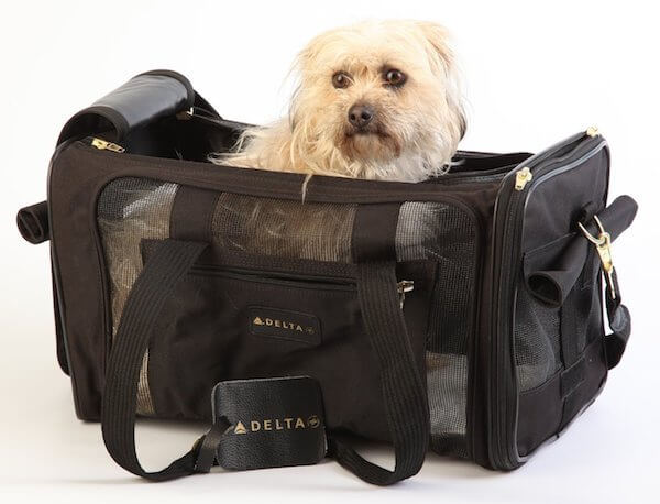 BUY THIS DOG AIRLINES APPROVED CARRIER BACKPACK
