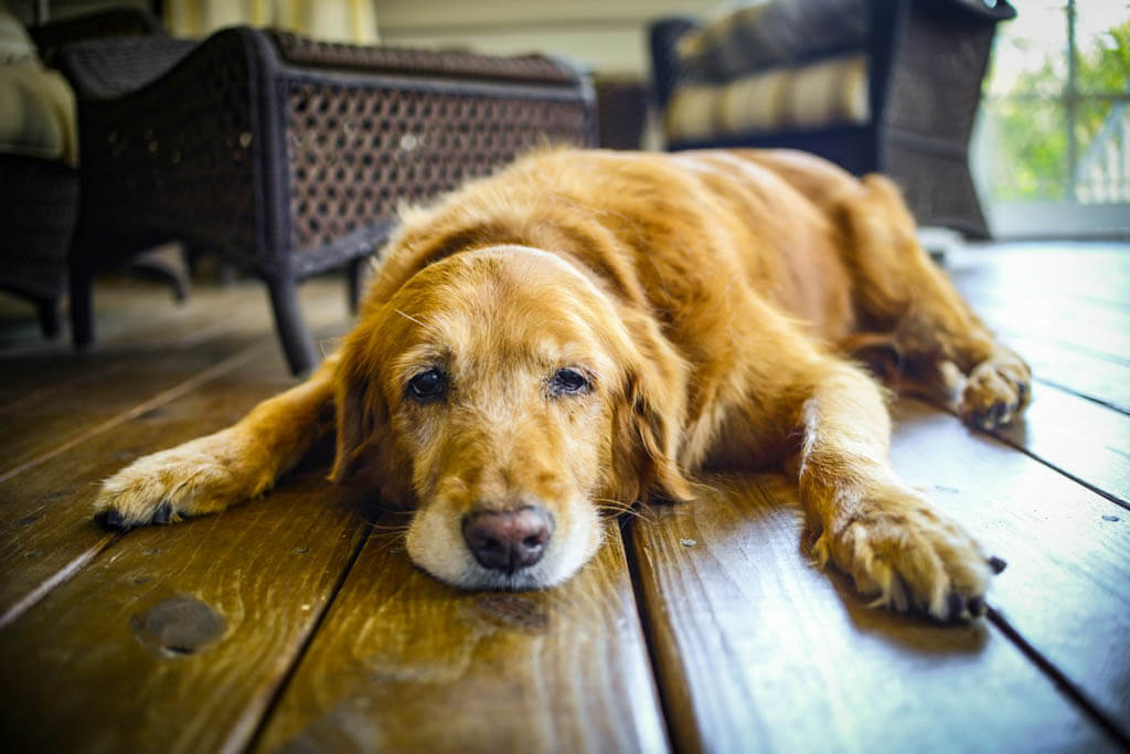 DOG BEREAVEMENT GUIDE, DOG DEATH, R.I.P, Dog loss