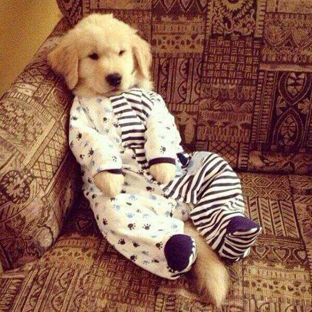 DOG & PUPPY PAJAMAS