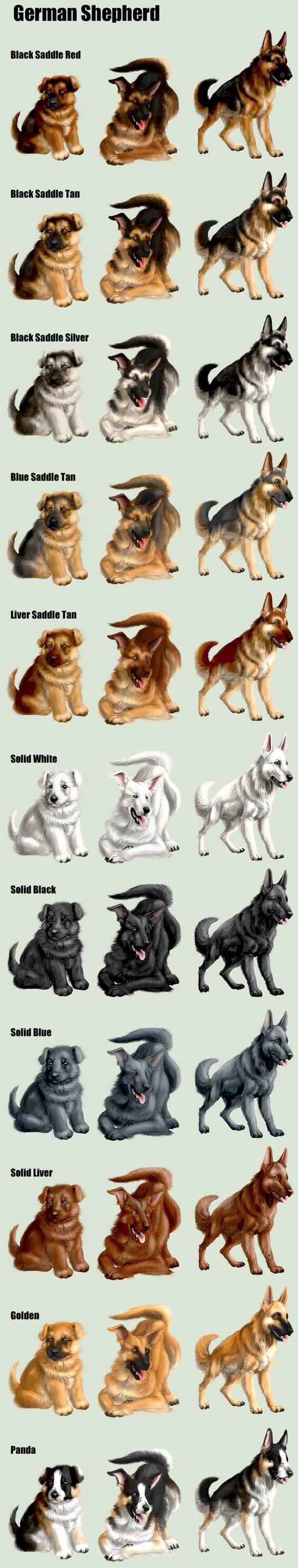 DOG COLORS