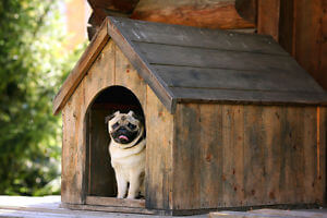 HOW TO CLEAN DOGHOUSE