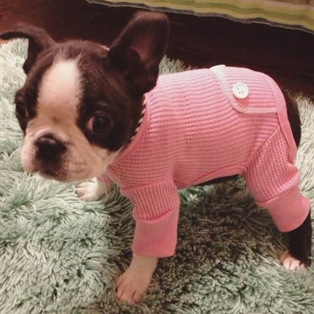 MAKE SEW COMFORTABLE WARM CUSTOM HOMEMADE DIY DOG PAJAMA, DOG & PUPPY PAJAMA FREE PATTERNS & PRINTS