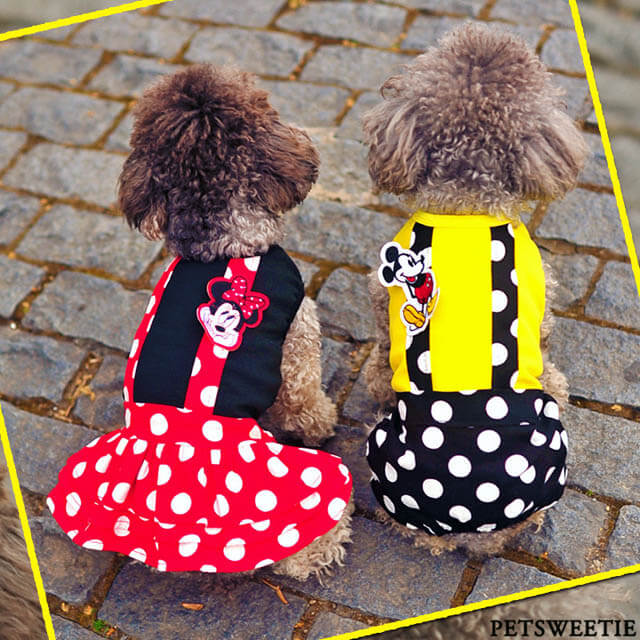 HOW TO CHOOSE BEST DOG & PUPPY PAJAMA