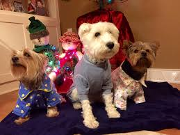 XL LARGE SMALL BEST DOG & PUPPY PAJAMAS, BUY, HOMEMADE, PHOTOS, INFOGRAPHICS, VIDEOS