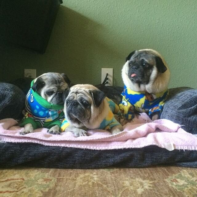 HOW TO THROW MANAGE ORGANIZE GREAT DOG & PUPPY PUP PAJAMA PARTY