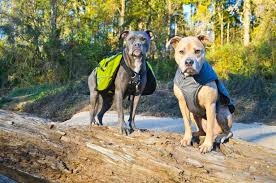 DOG & PUPPY BACKPACK, OUTDOOR SADDLE BAGS, DOG CARRYING HARNESS, CARRIER, PETCO, RUFFWEAR, CESAR MILLAN, KURGO