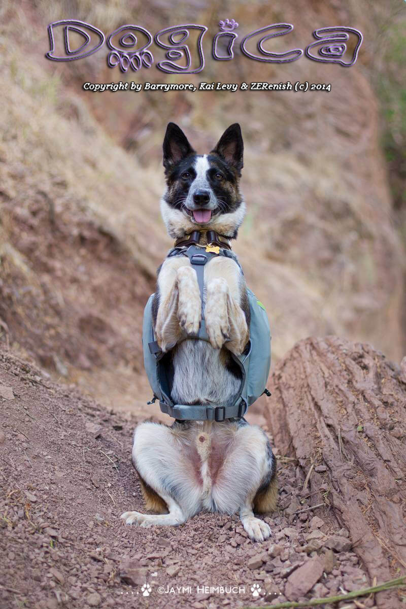 DOG and PUPPY BACKPACK