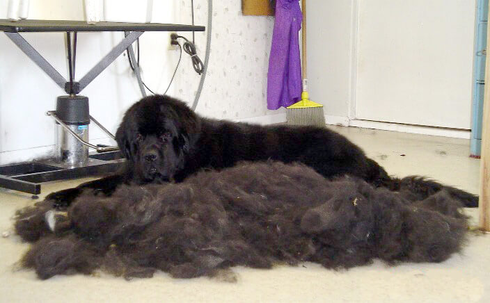 DOG and PUPPY coat and fur SHEDDING!