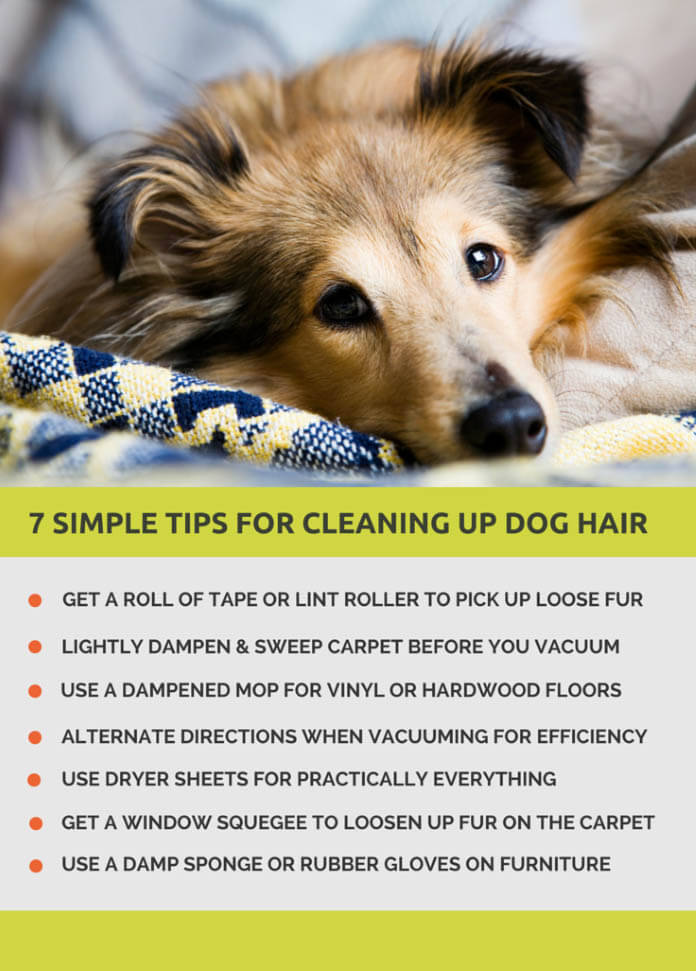 DOG and PUPPY coat & skin health