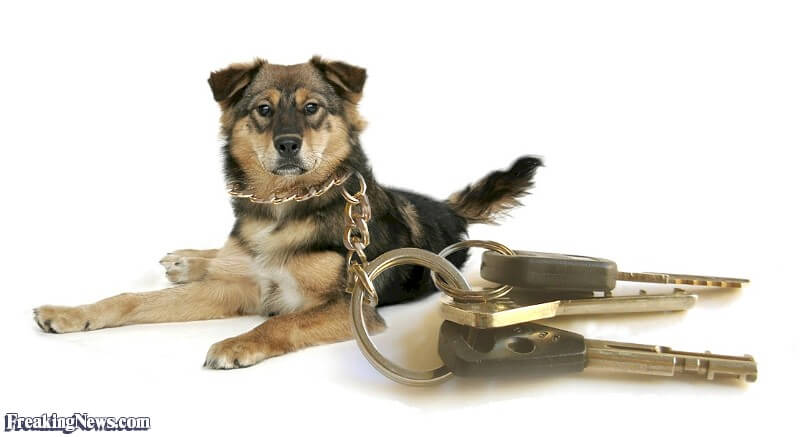 MINIATURE DOGS CARE & MAINTENANCE