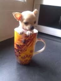 The Smallest Dog on The Earth